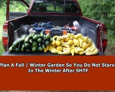 Planning a Fall / Winter SHTF Survival Garden – Don't Starve