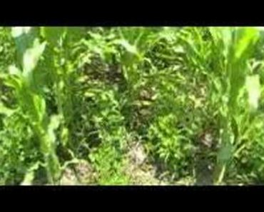Survival Gardening Part 1  peak oil, food storage, prepper, survivalist, economic collapse, doomsday