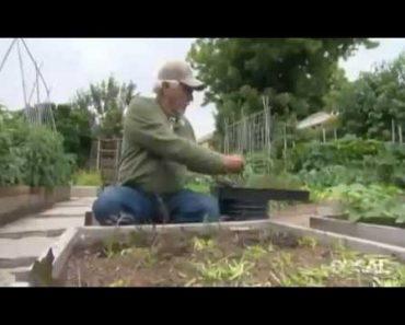 Prepper Backyard Farming 1/4 Acre = TONS of Food