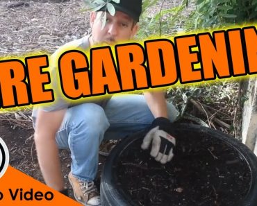 Grow a Survival Garden ANYWHERE With This…