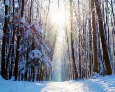 Winter Foraging – 8 Survival Foods You Can Forage In The Dead Of Winter