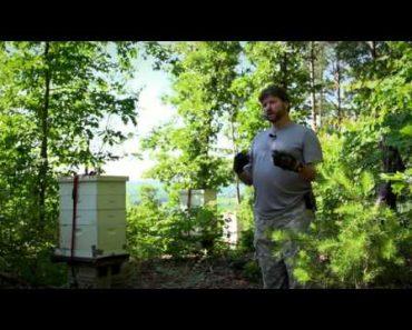 The importance of honey bees by Secret Garden of Survival – Rick Austin, Survivalist Gardener