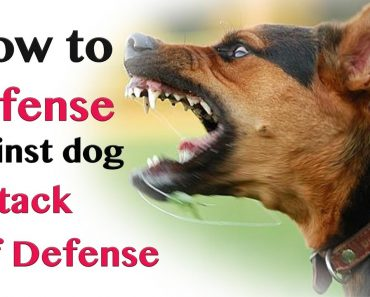 How to Defend against Dog Attack – Self Defence