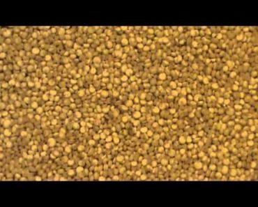 Quinoa The Prepper Super Food!!!