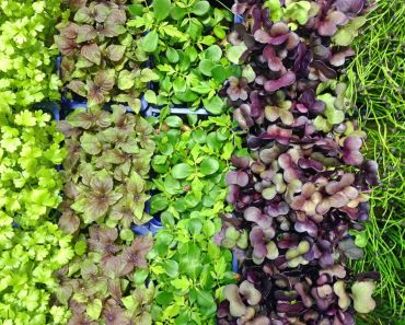 5 Ways To Get A Balanced Meal With Microgreens And Sprouts