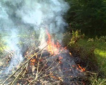 Making wood ash for garden soil – prepper survival