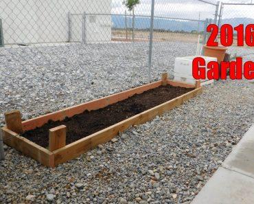 The 2016 Survival Garden!