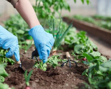 9 Survival Garden Plants You Didn't Know You Need
