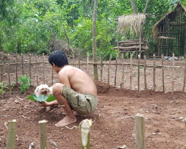 Survival Skills – making vegetable gardens in the forest – ep 15