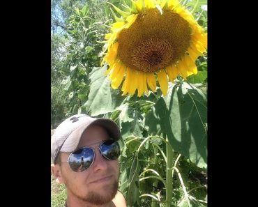 "Growing HUGE Texas Mammoth Sunflowers ""Prepper Crop"""