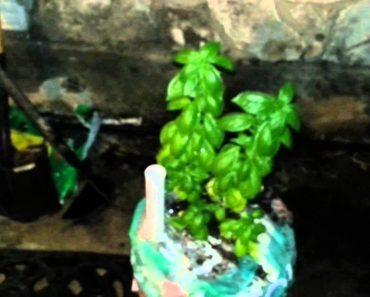 ( Doomsday Preppers ) PREPPER MOBILE FOOD GARDEN – Self Watering Container Bucket