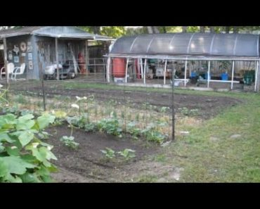 Non-Essential Workers Plant Victory/Survival Garden