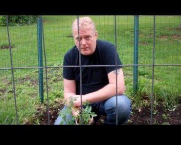 Survival Garden 2011