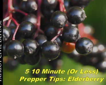 10 minute (or less) Prepper Tip: Black Elderberry