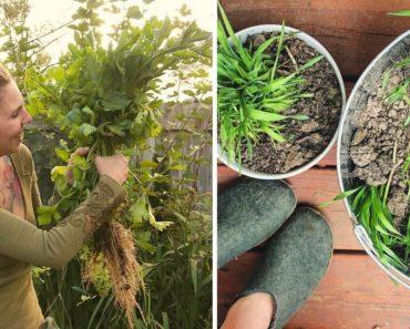 ? Grow a Garden for DIRT CHEAP!! ZERO WASTE Survival Gardening!! ??