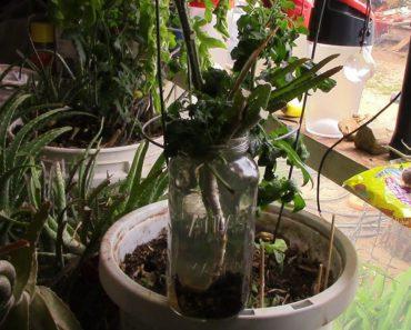 VR to NWA Prepper — April Garden Challenge