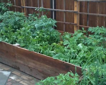 My victory/survival garden – The full tour!