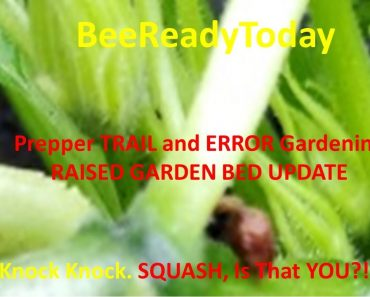 BeeReadyToday Prepper (Wanna Bee) TRIAL and ERROR GARDENING – Squash, is that YOU!