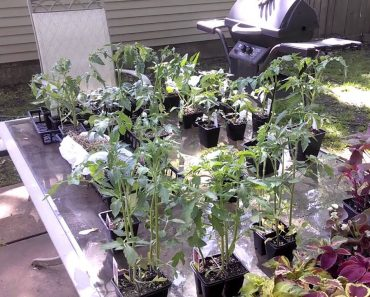 Prepper~Prepper How Does Your Garden Grow? Part 2