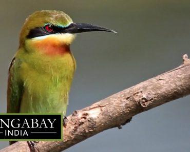City survival tips for birds