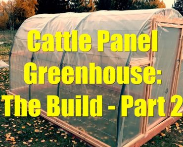Cattle Panel Greenhouse: The Build – Part 2
