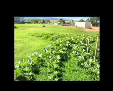Problems, Principles & Preparation for Survival Gardening: Nutrition 5150w