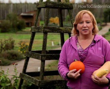 Three Sisters Gardening – Sustainable Prepper Gardening