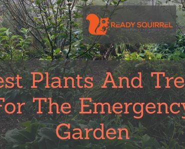 Build a survival garden and become food independent