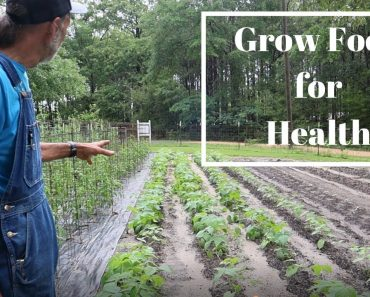2021 GARDEN TOUR | Raised Beds | Containers | WHAT Is Growing?