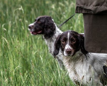 What Dog Breed is Right for Your Off-Grid Lifestyle?
