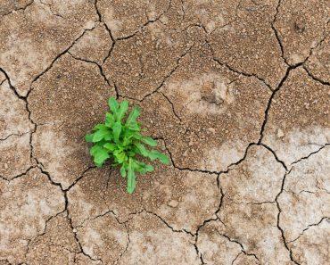 Survival in Arid Lands – Survivopedia